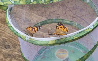 Unsere Schmetterlinge fliegen weg!
